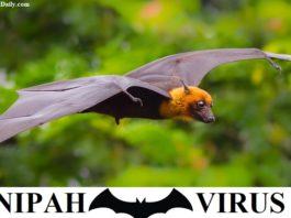 Nipah Virus Through Bat - Symptoms,Precautions