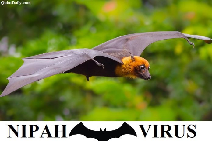 Nipah Virus Through Bat - Symptoms,Precautions